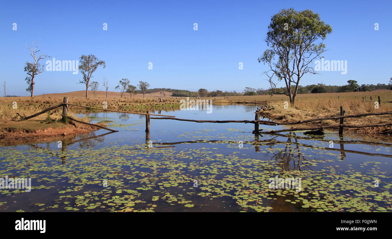 Australian outback billabong with fence and water lillies - Stock Image