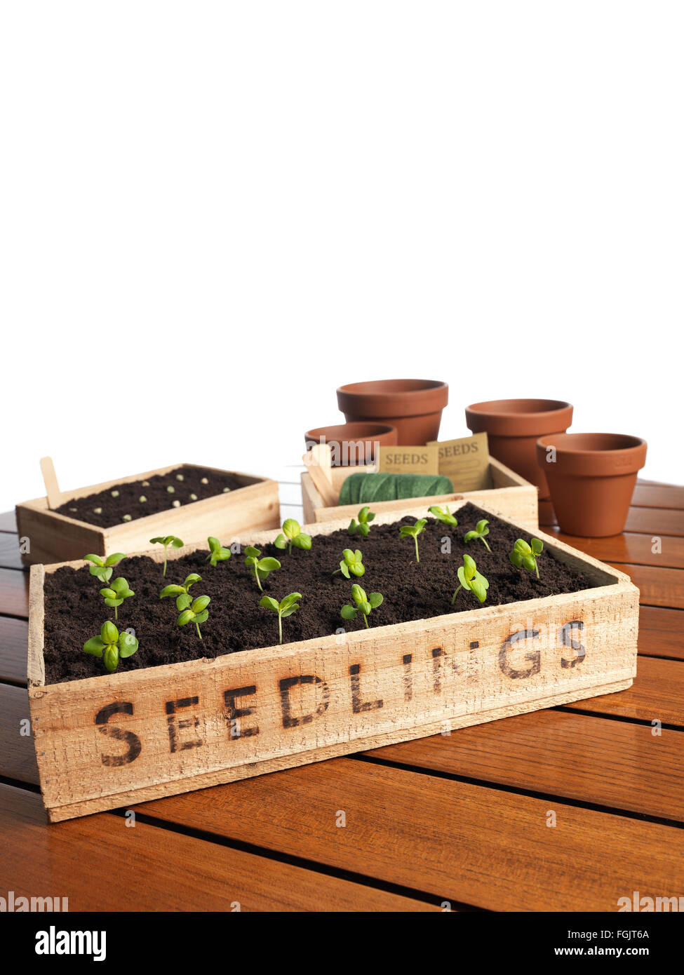 Seedling tray filled with organic soil and plants - Stock Image