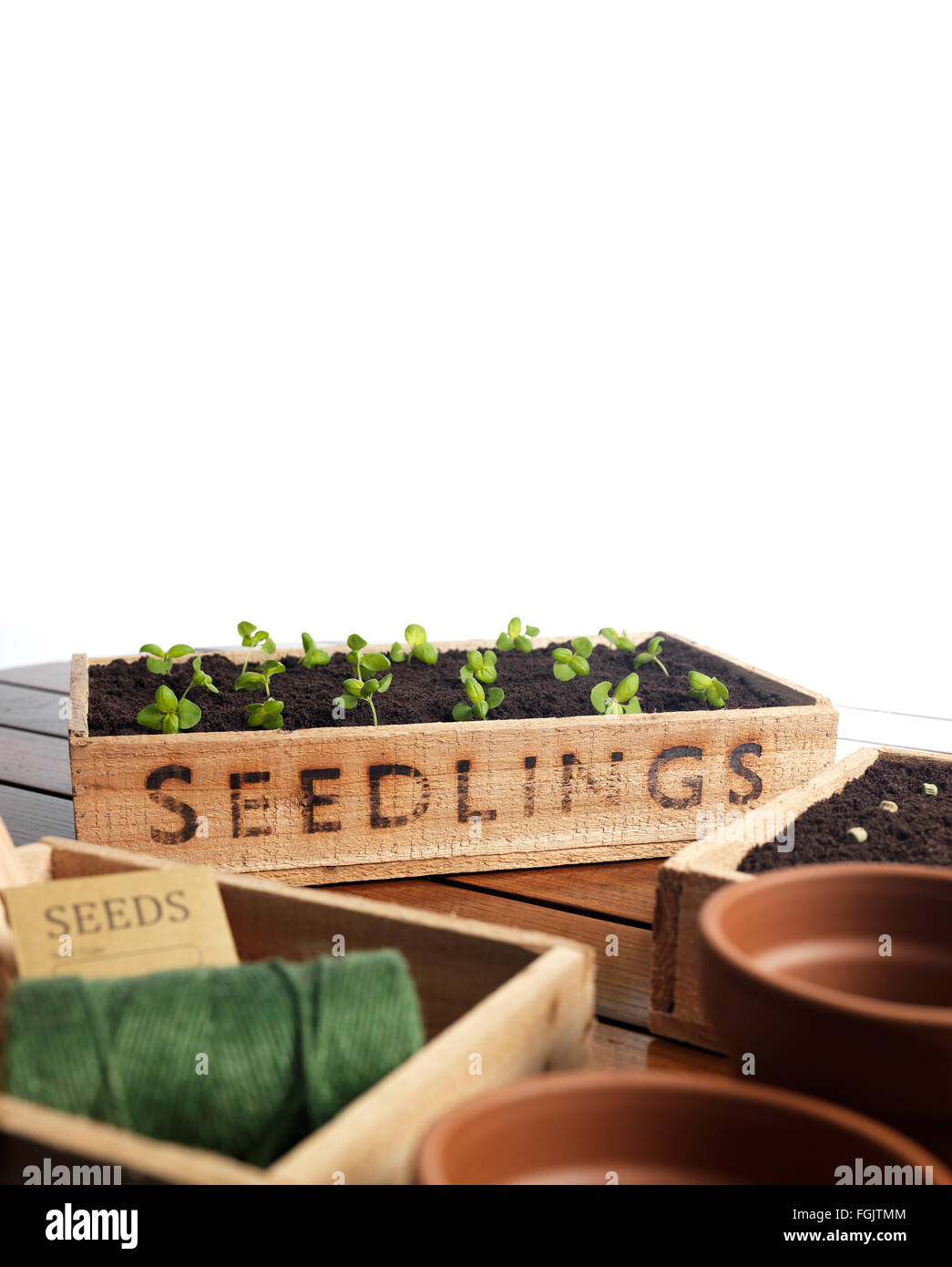 Seedling tray with organic soil and gardening equipment - Stock Image