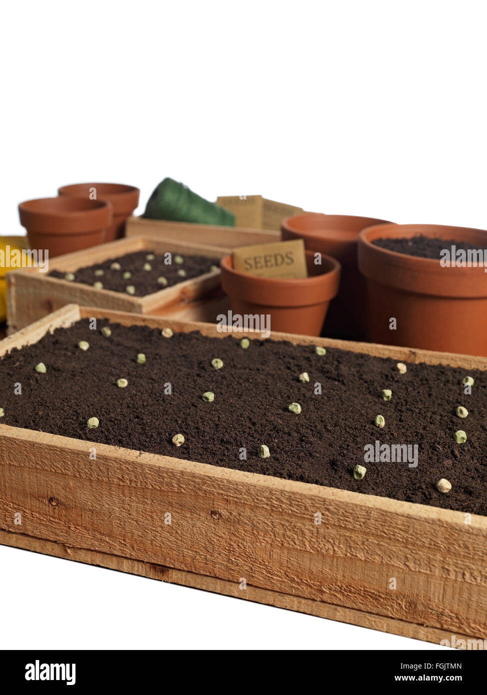 Seedling tray filled with organic soil and seeds - Stock Image