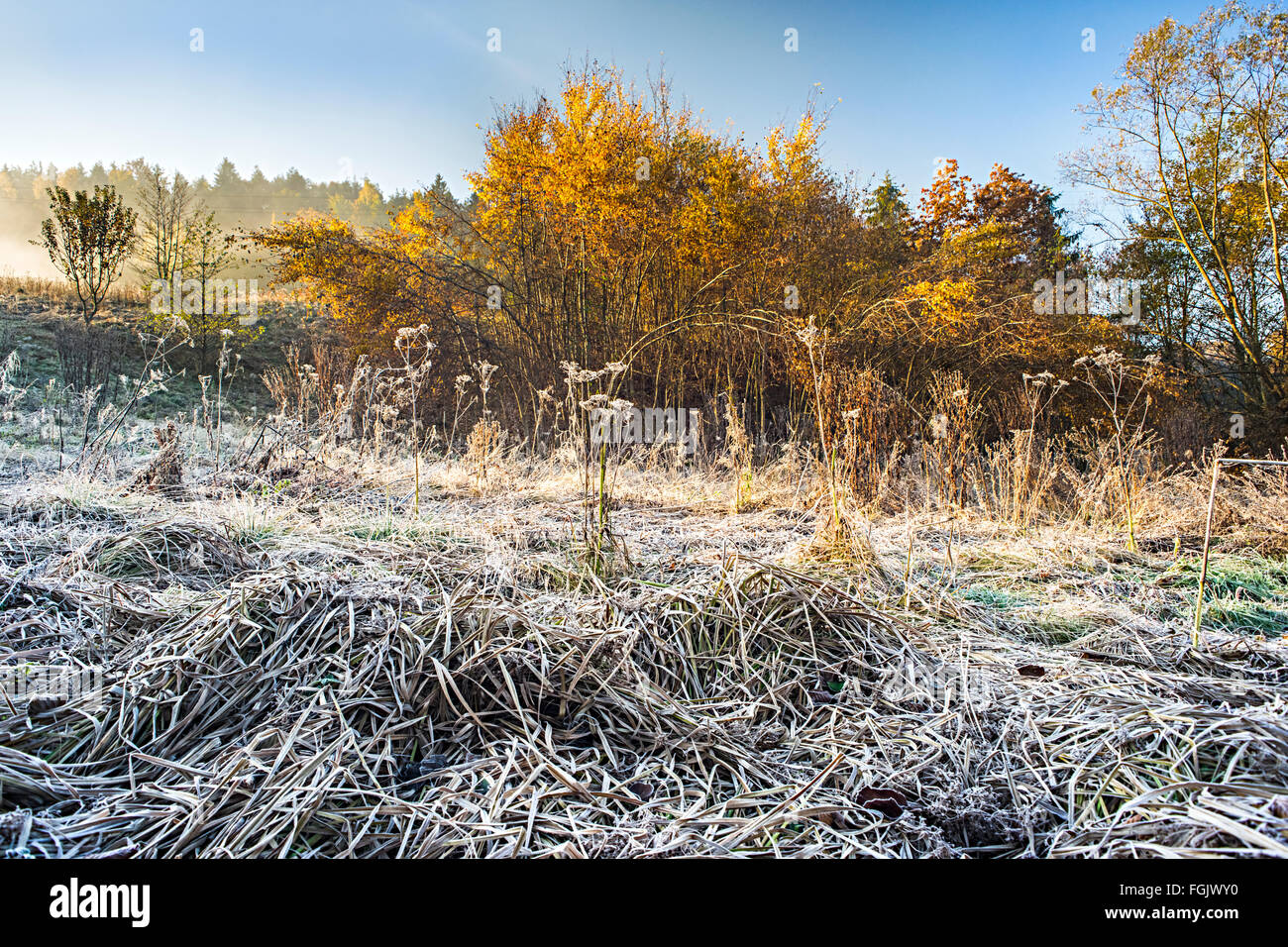 Frost on the ground in autumn - Stock Image
