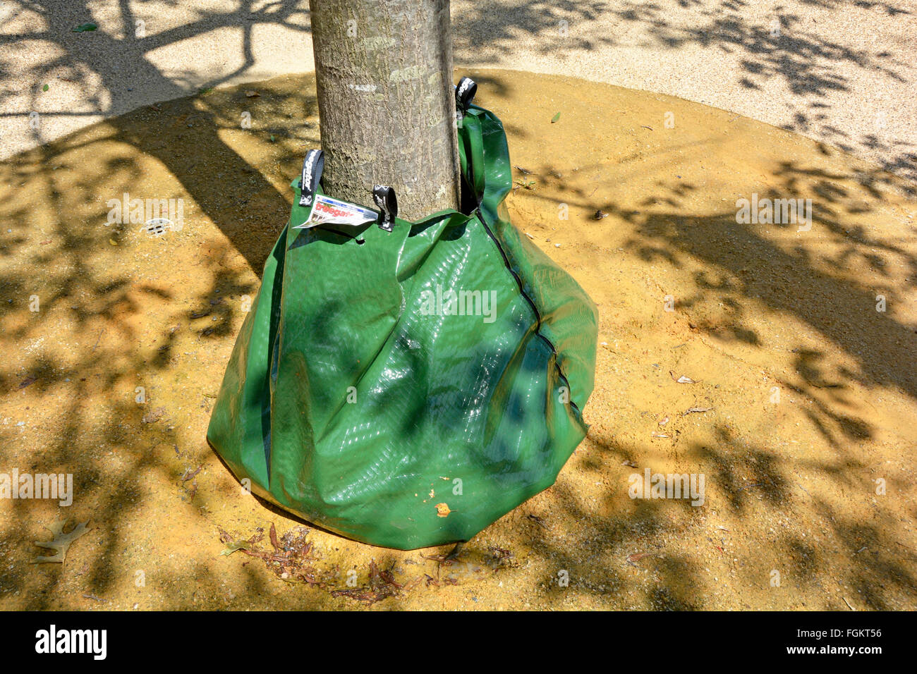 Treegator slow release water bag placed at the bottom of trunk new planting of trees in the Queen Elizabeth Olympic - Stock Image