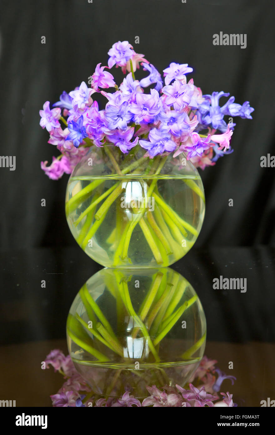 vase, flower, hyacinth, purple, nature, flowers, single, color Stock ...