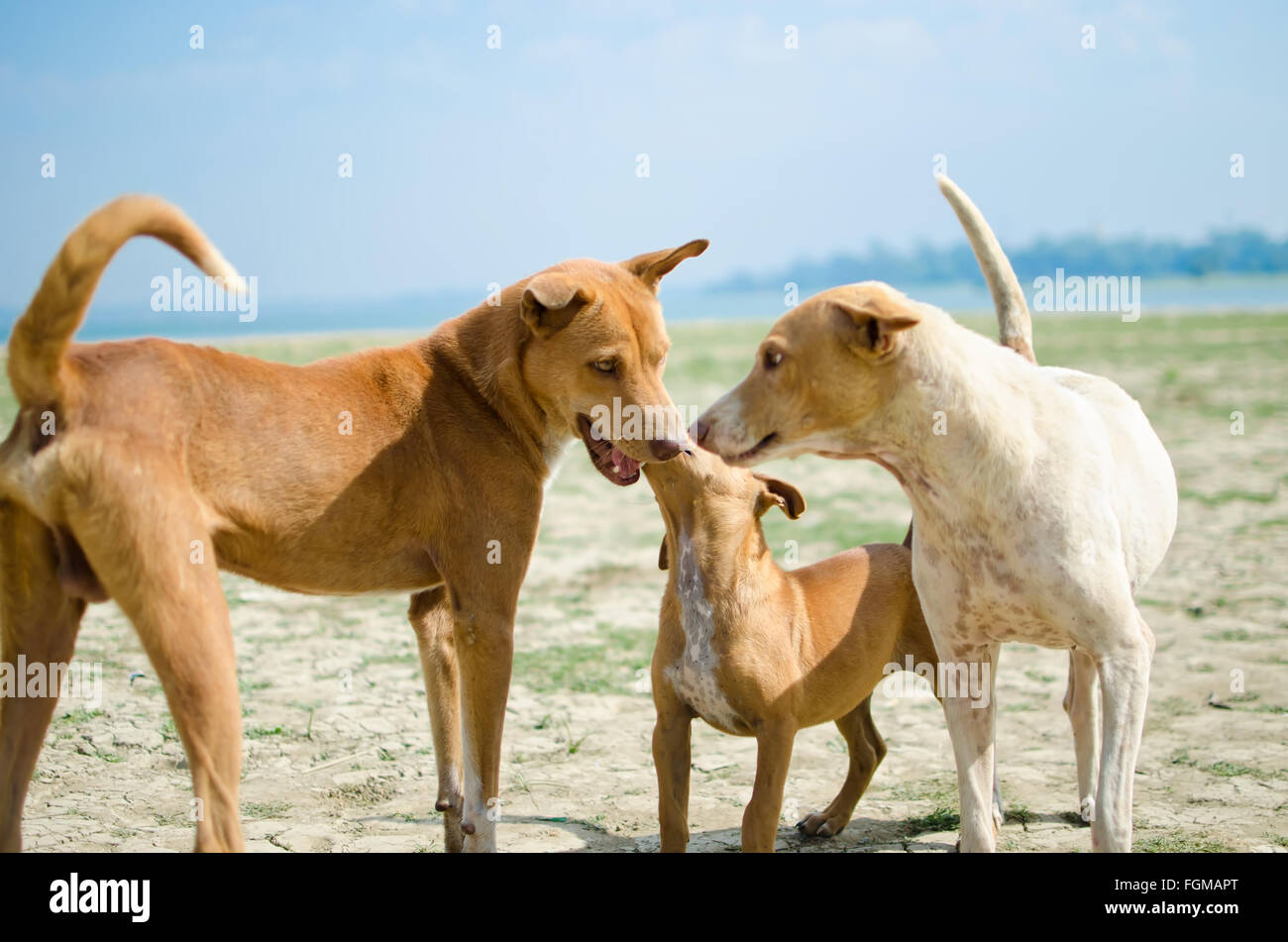 A beautiful dog family - Stock Image