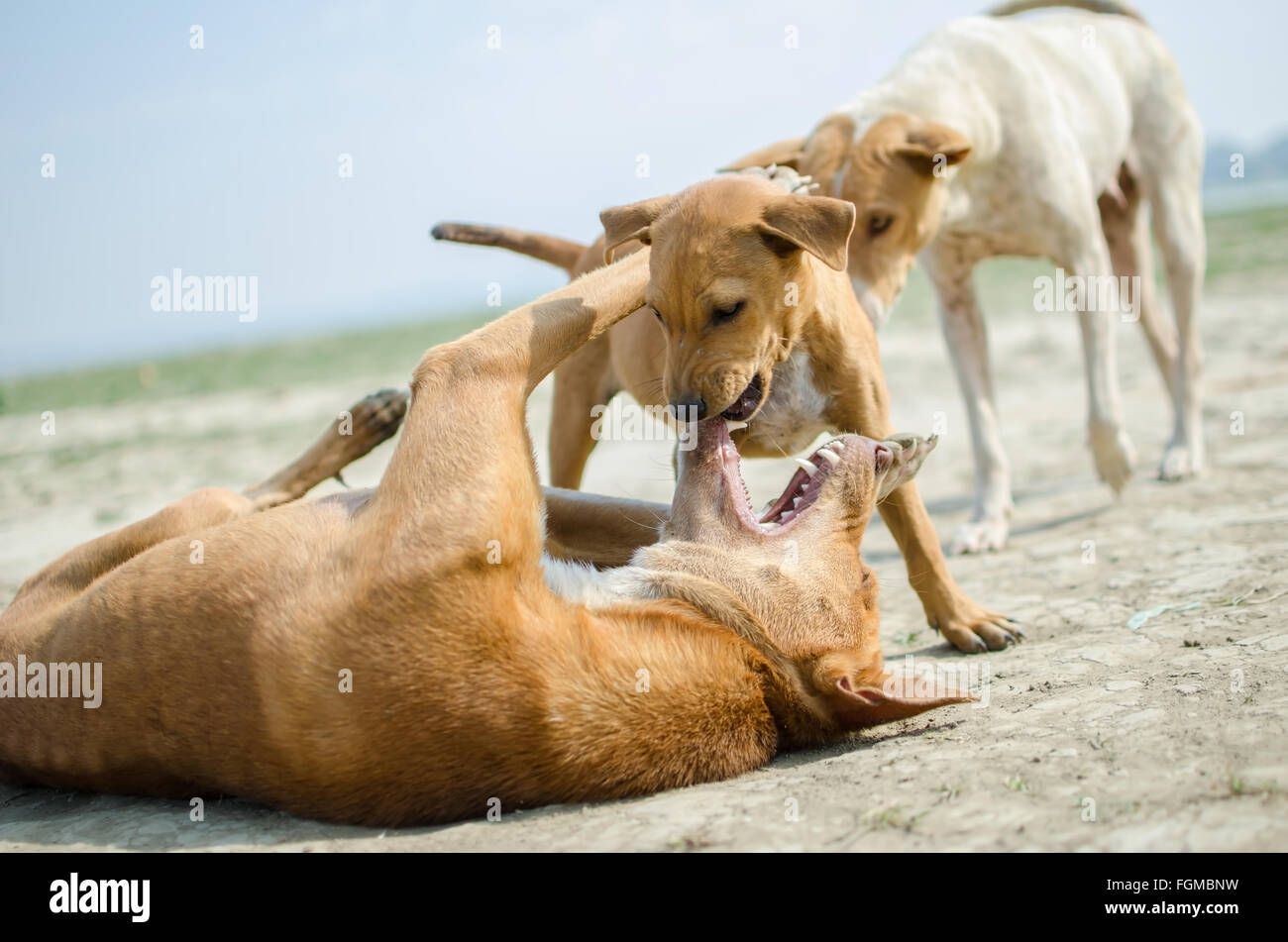 A dog family - Stock Image