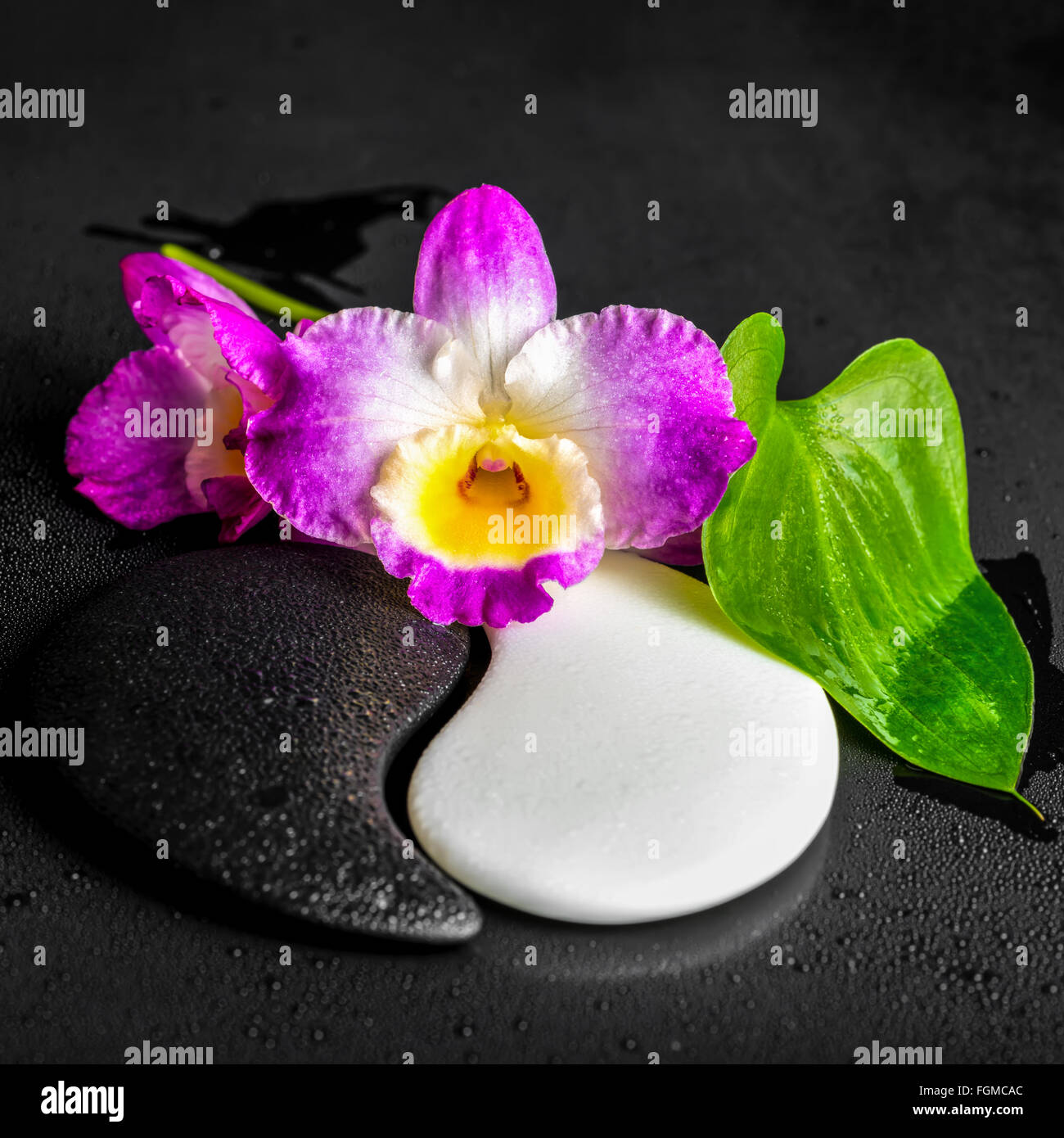 Yin Yang Symbol Of Stone Texture With Green Leaf Calla Lily And