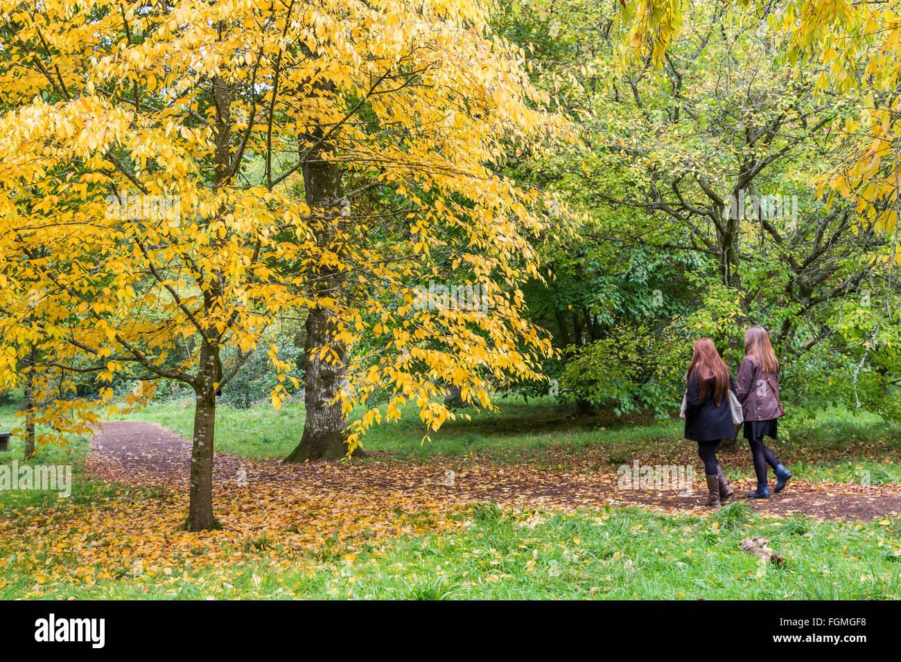 Two people walking on path through acers at Westonbirt Arboretum, Gloucestershire, Enhgland, UK - Stock Image