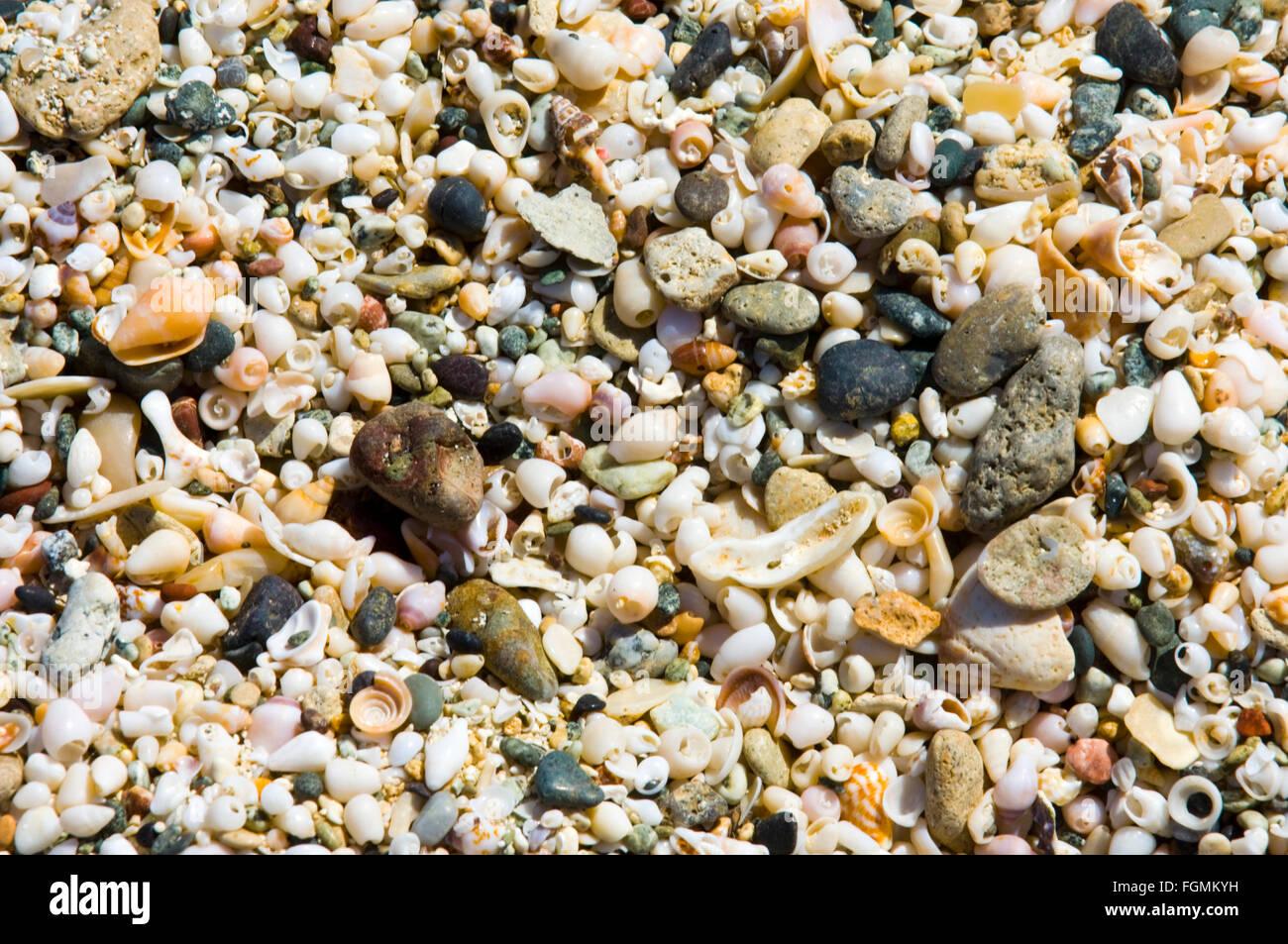 Griechenland, Kreta, Ireapetra, Insel Chrissi, Muscheln Stock Photo