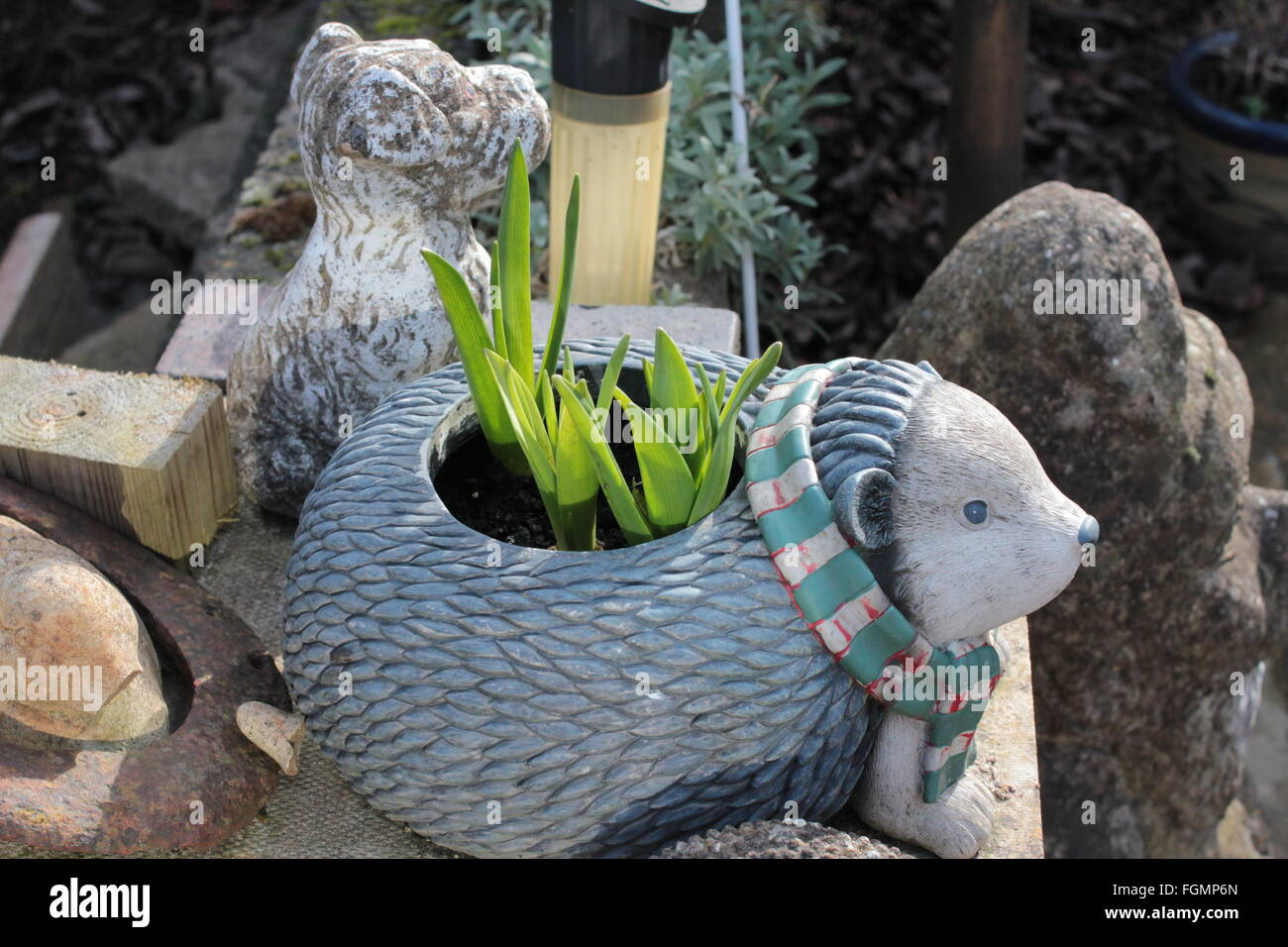 hedgehog comic planter and plant - Stock Image