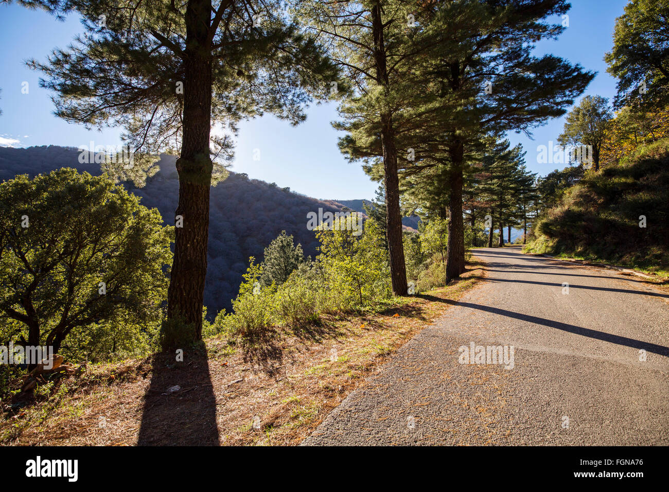 Rural road pine forest Genal valley, Serrania de Ronda. Malaga province, Andalusia Southern Spain - Stock Image