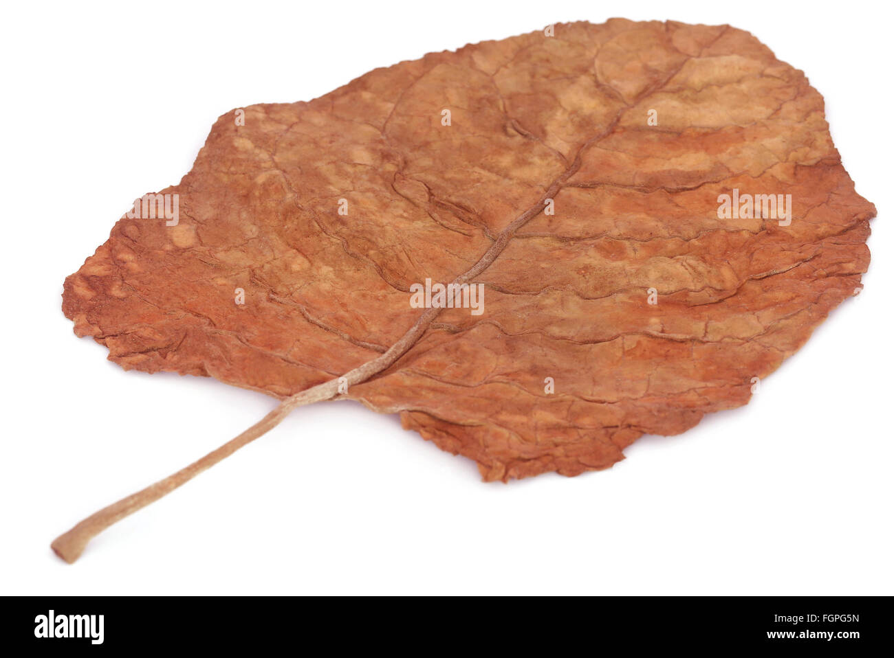 Whole dry tobacco leaves over white background - Stock Image