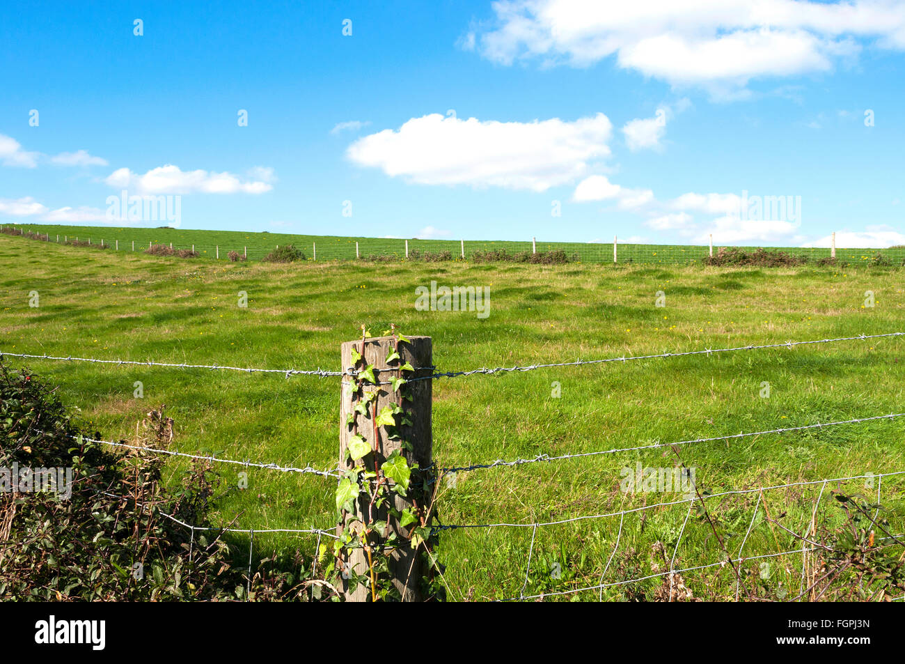 an empty pasture field with barbed wire fence Stock Photo