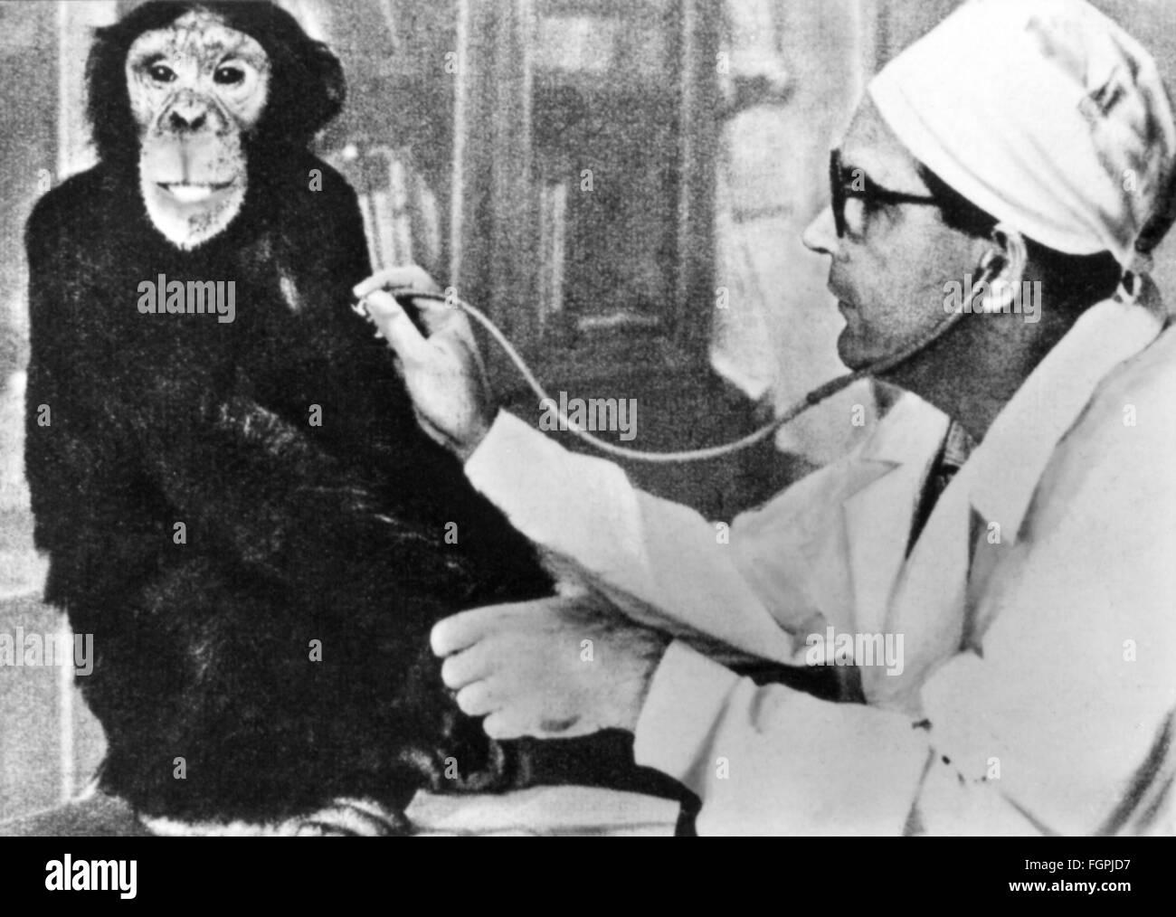 medicine, diseases, poliomyelitis, examination of a chimpanzee, institute for scientific research of poliomyelitis, - Stock Image