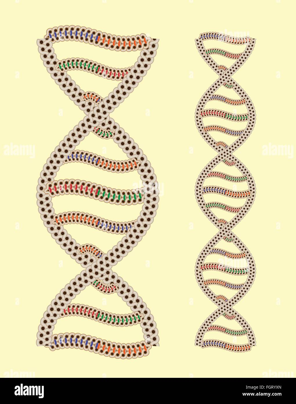 Vector DNA as Greek ornament - seamless after quick edit - Stock Vector