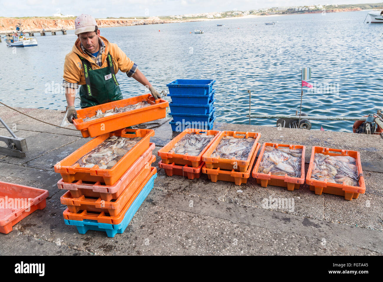 Man unloading fresh catch of squid and octopus on quay, harbour at Sagres, Algarve; Portugal - Stock Image