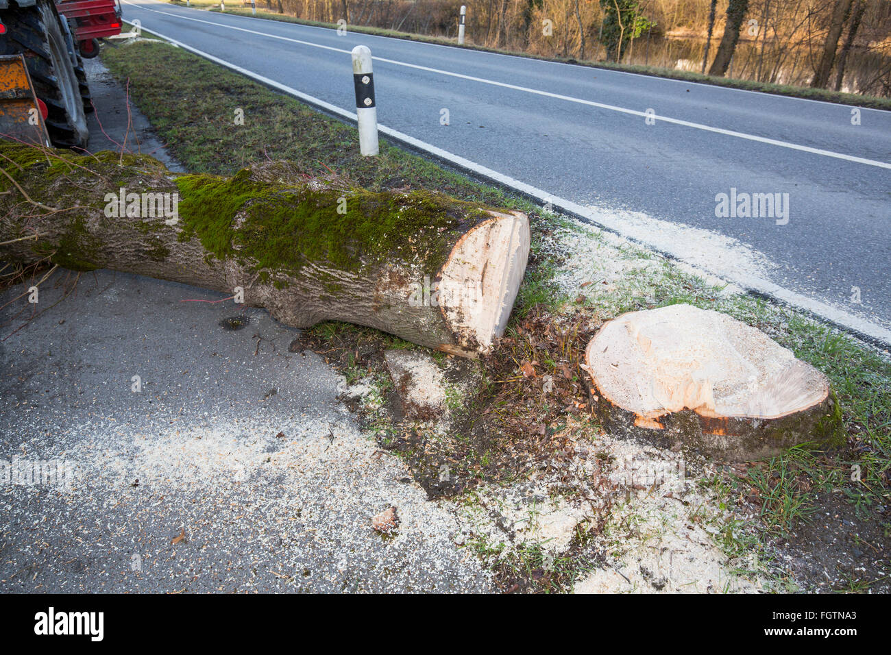 Cutting down a tree, felling a tree along a road, Baum fällen, Baumstamm, tree trunk - Stock Image