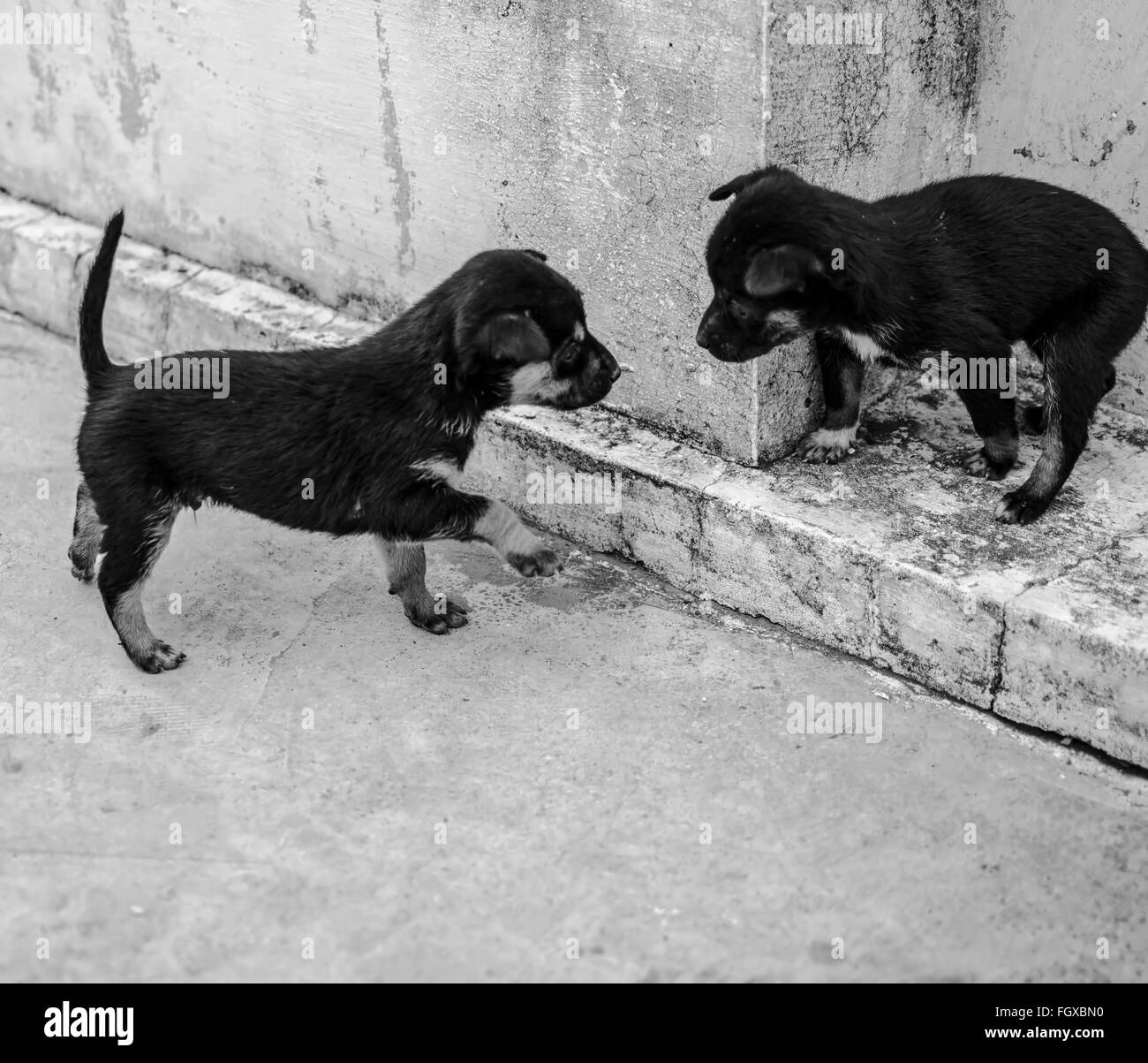 A meeting between puppies - Stock Image