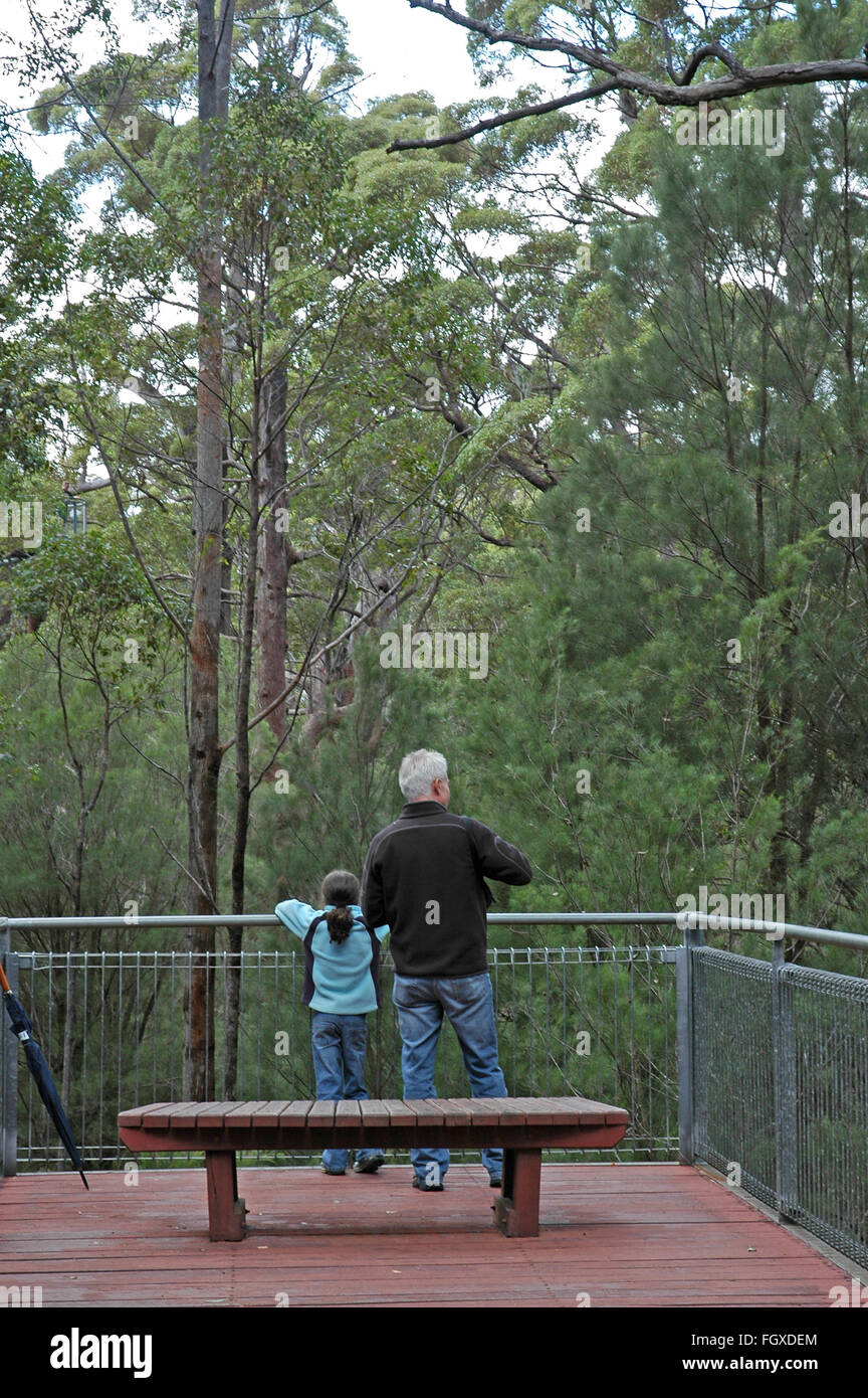 Father and daughter looking at huge eucalyptus trees from a raised platform in The Valley Of The Giants Tree Top - Stock Image