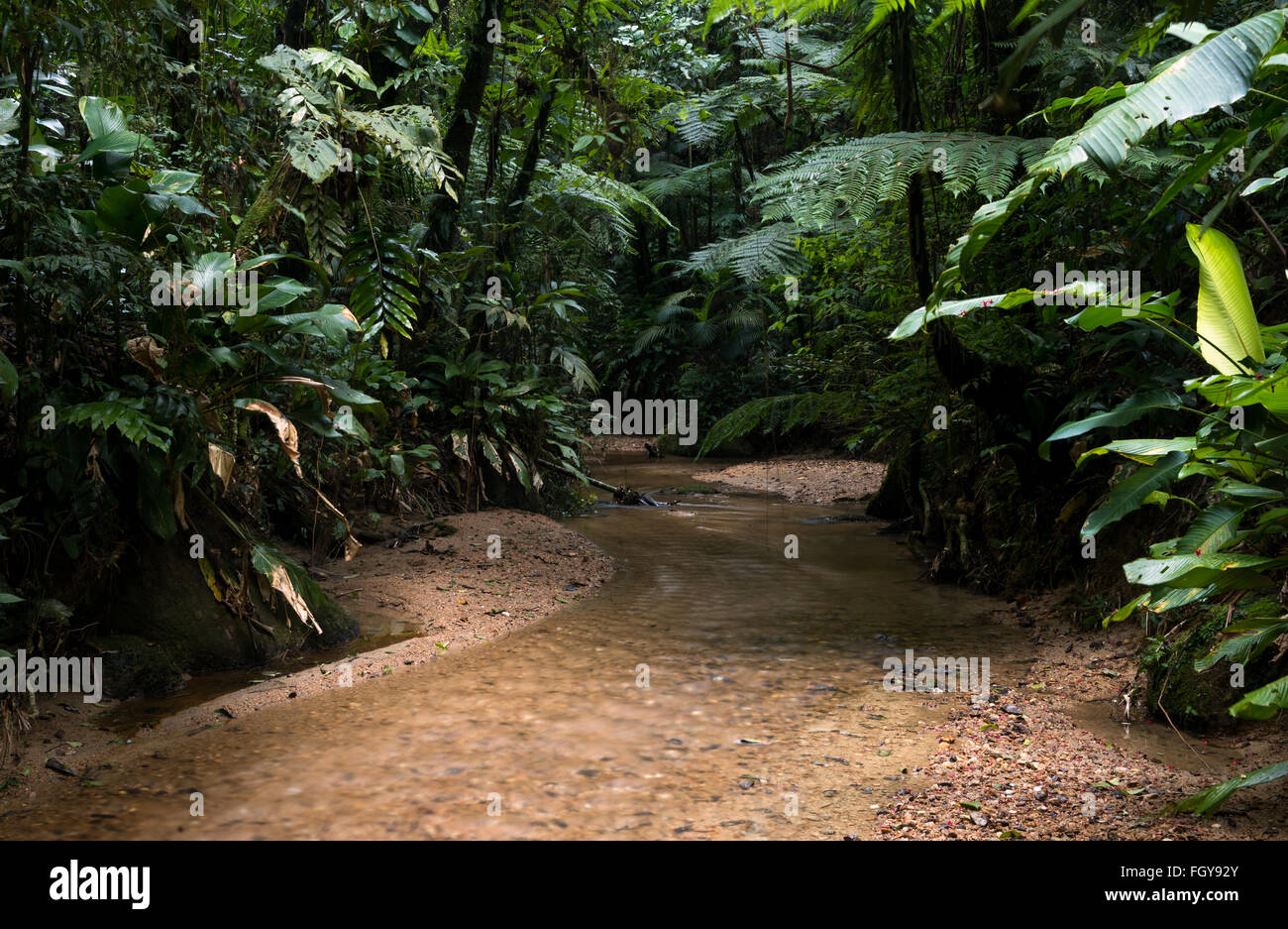 A secluded creek running through primary Atlantic Rainforest - Stock Image
