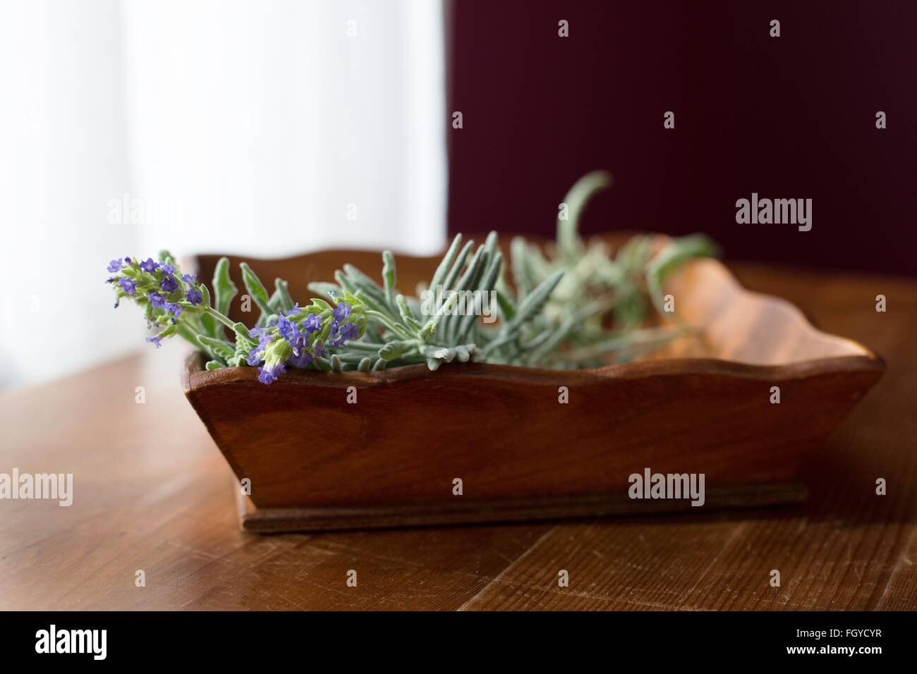 A wooden container full of lavender sprigs. - Stock Image