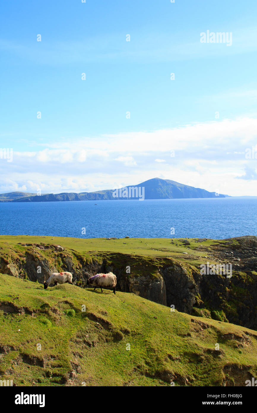 Sheep grass on a green clifftop under a blue sky with the sea and a mountain in the background - Stock Image