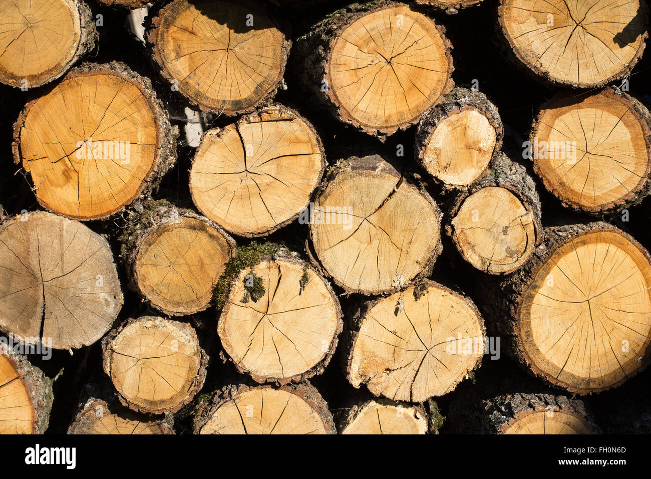 Wood Logs Stacked For Storage