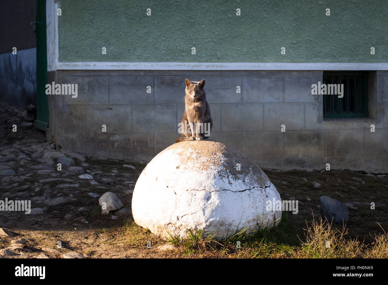 Mean, tough looking cat sits on big rock in front of house - Stock Image