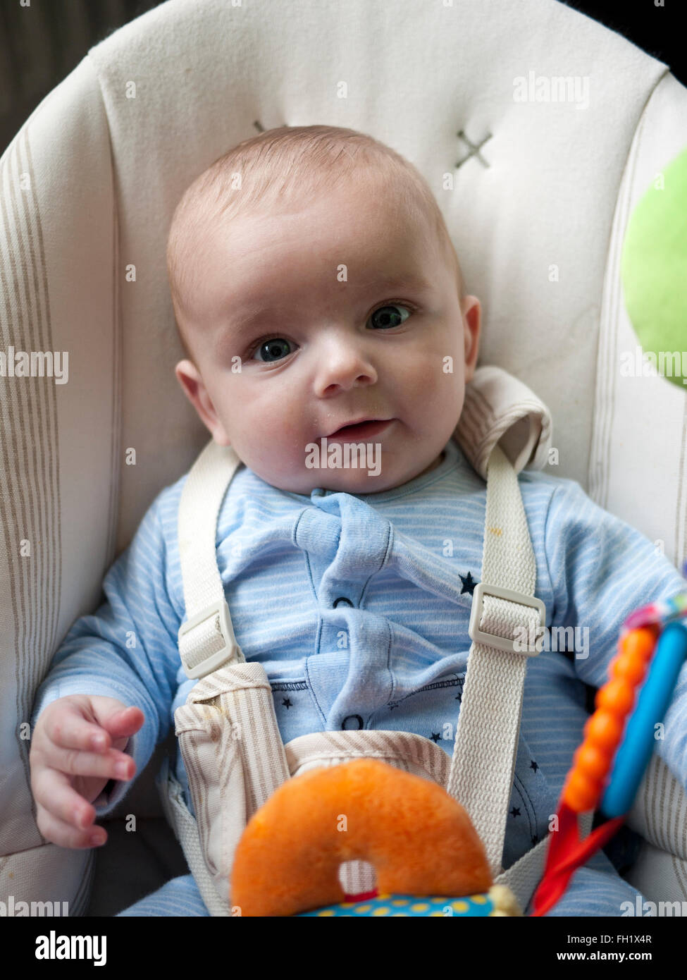 Six month baby boy sitting in a reclining chair with harness,UK. - Stock Image
