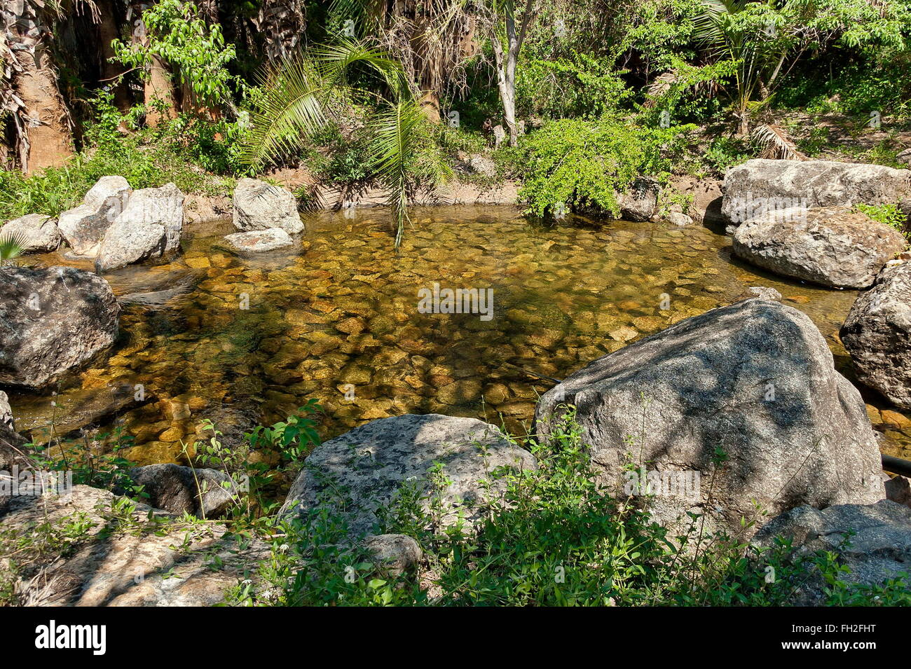Exotic tropical garden with palm in Sun City, South Africa Stock ...