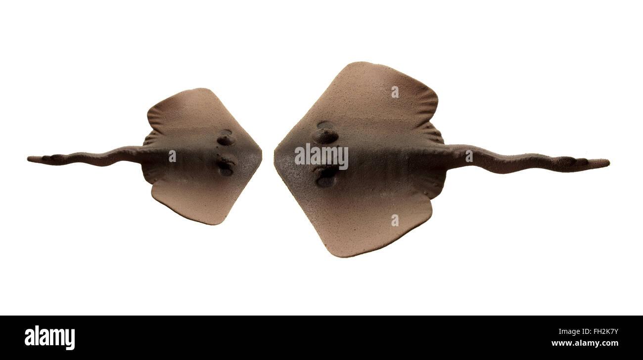 Stingrays - Stock Image
