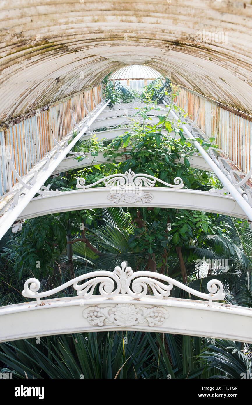 Kew Palm house Interior. Kew Gardens, London, UK - Stock Image