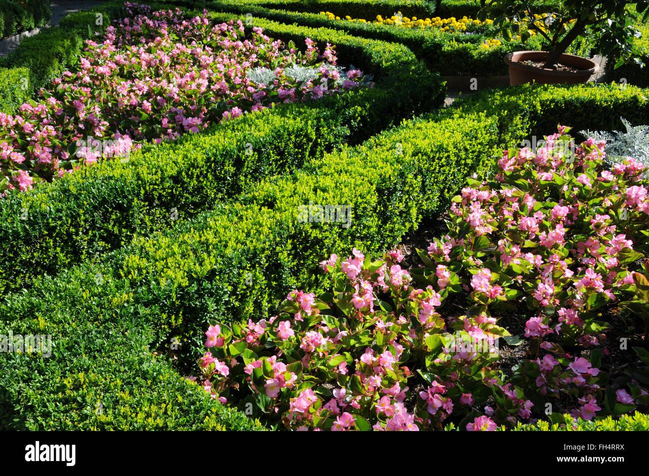 Box-tree hedge - Stock Image