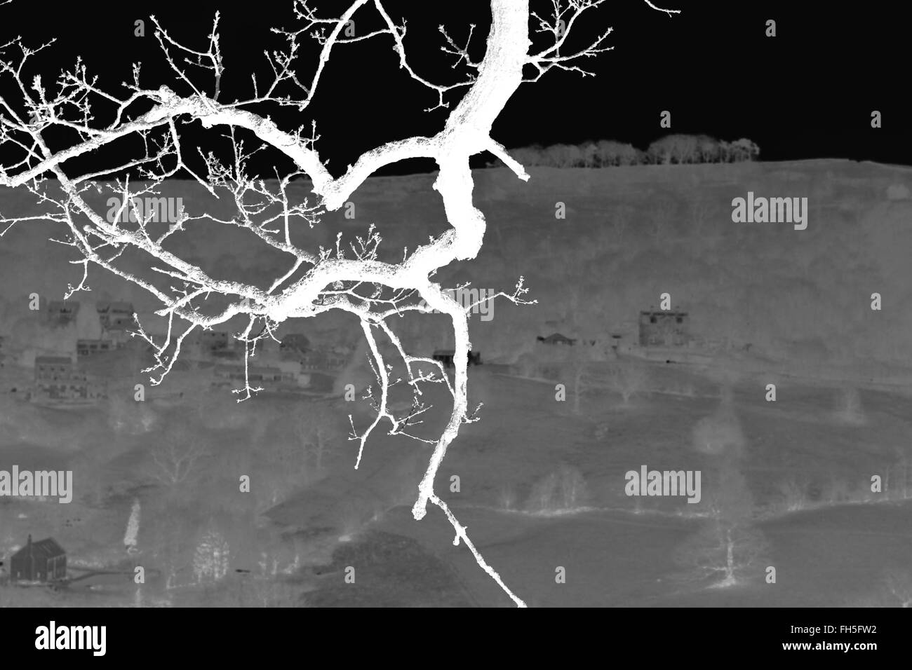 Twig In Negative Vision - Stock Image