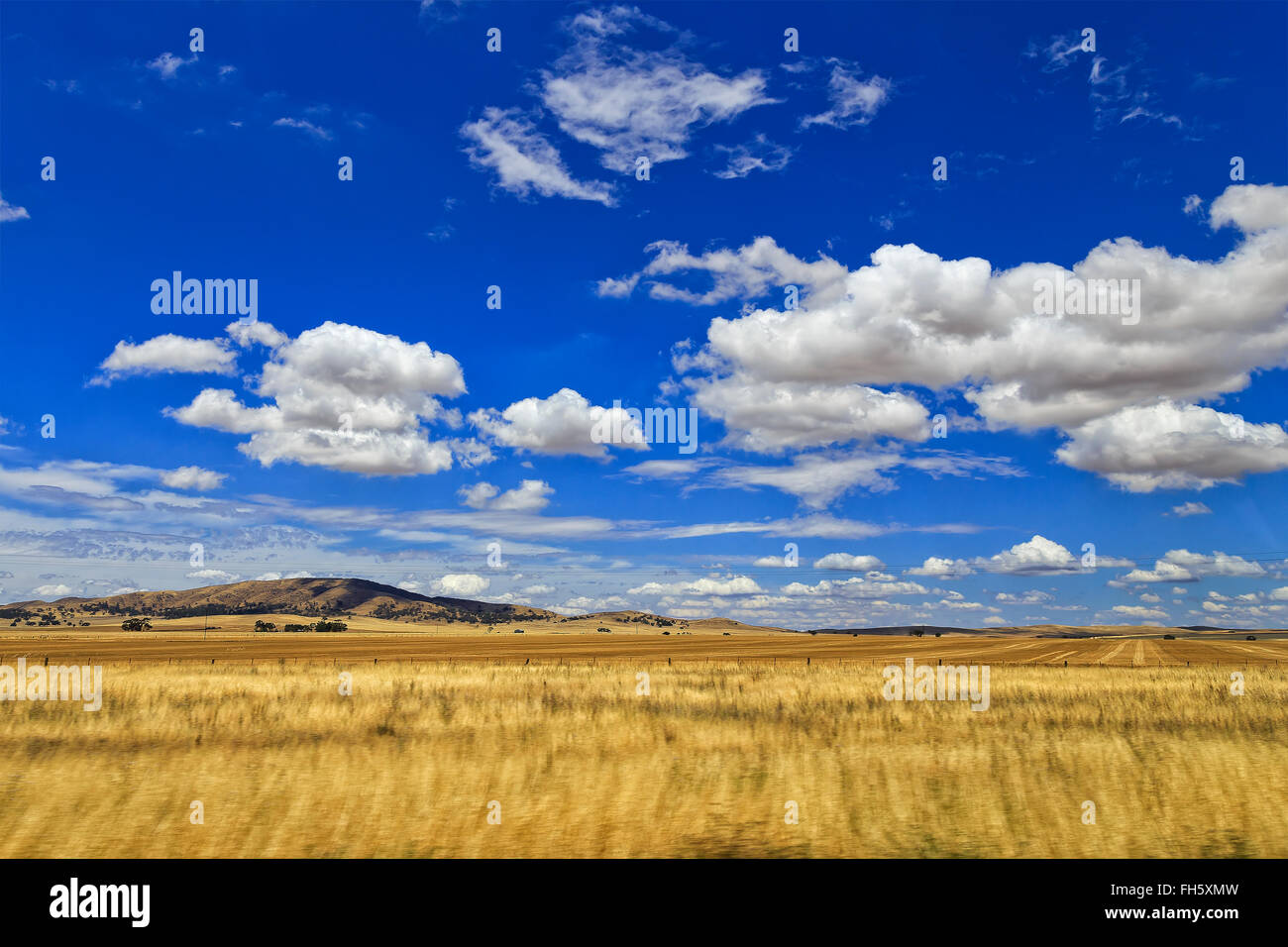 bright yellow wheat farm field with distant hills under blue sky with white clouds. Agricultural sector of South - Stock Image