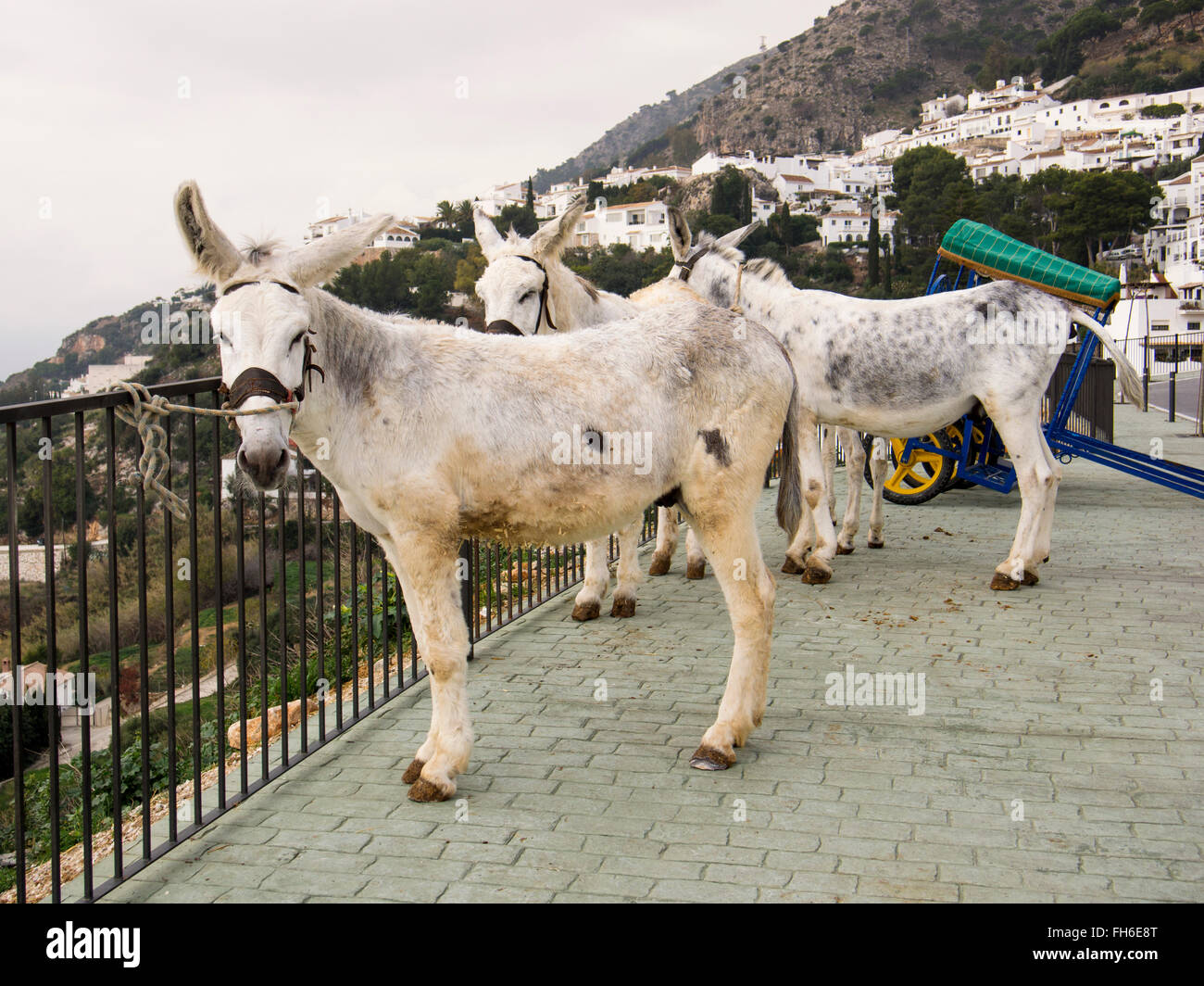 Typical burro donkey taxi, white village Mijas, Malaga province Costa del Sol. Andalusia southern Spain - Stock Image