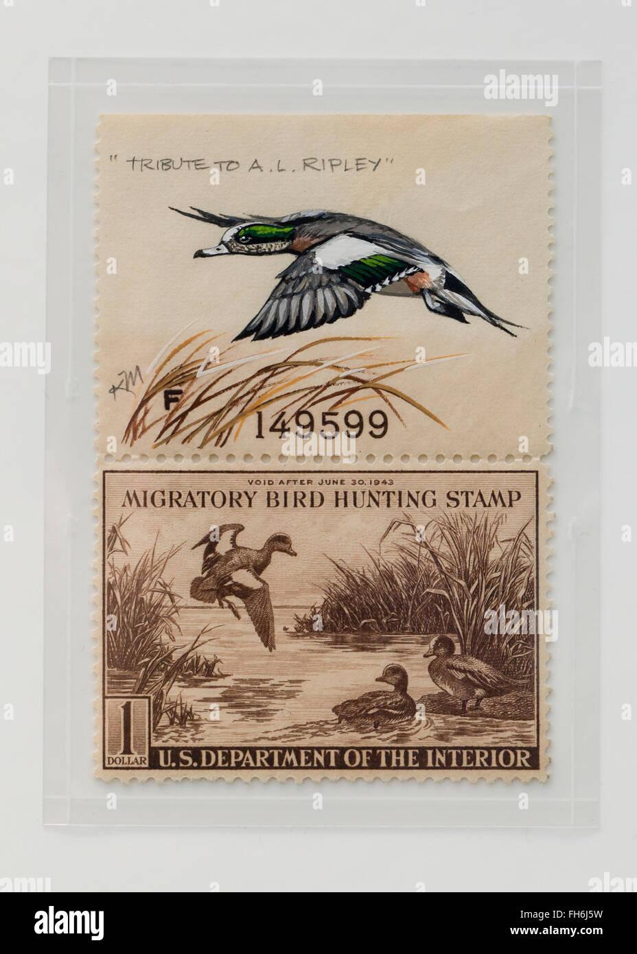 Vintage Migratory Bird Hunting Stamp $1 Baldtapes stamp, circa 1942 - USA - Stock Image