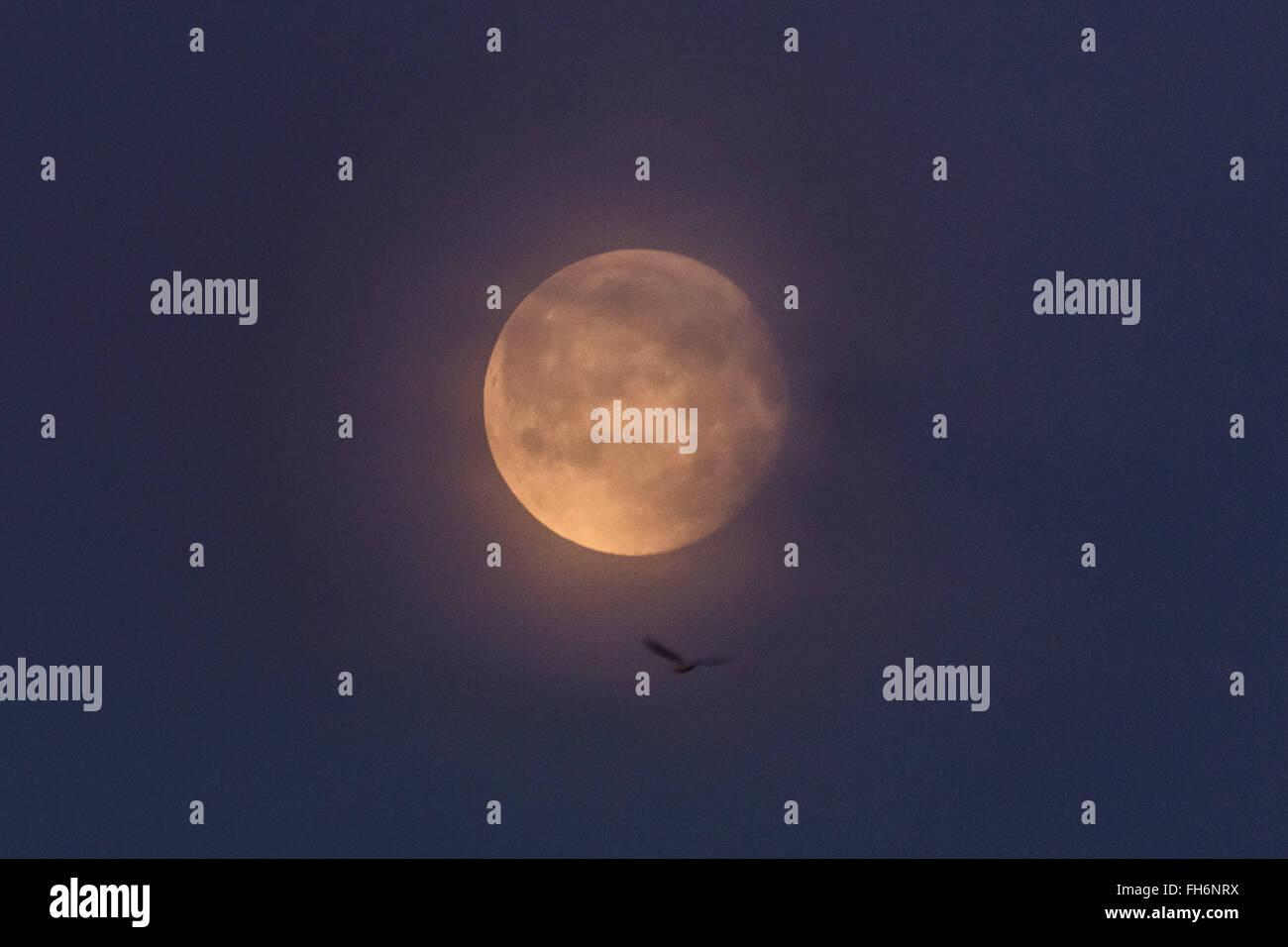London, UK. 24th February, 2016. Waning Gibbous Moon over London Credit:  Guy Corbishley/Alamy Live News - Stock Image