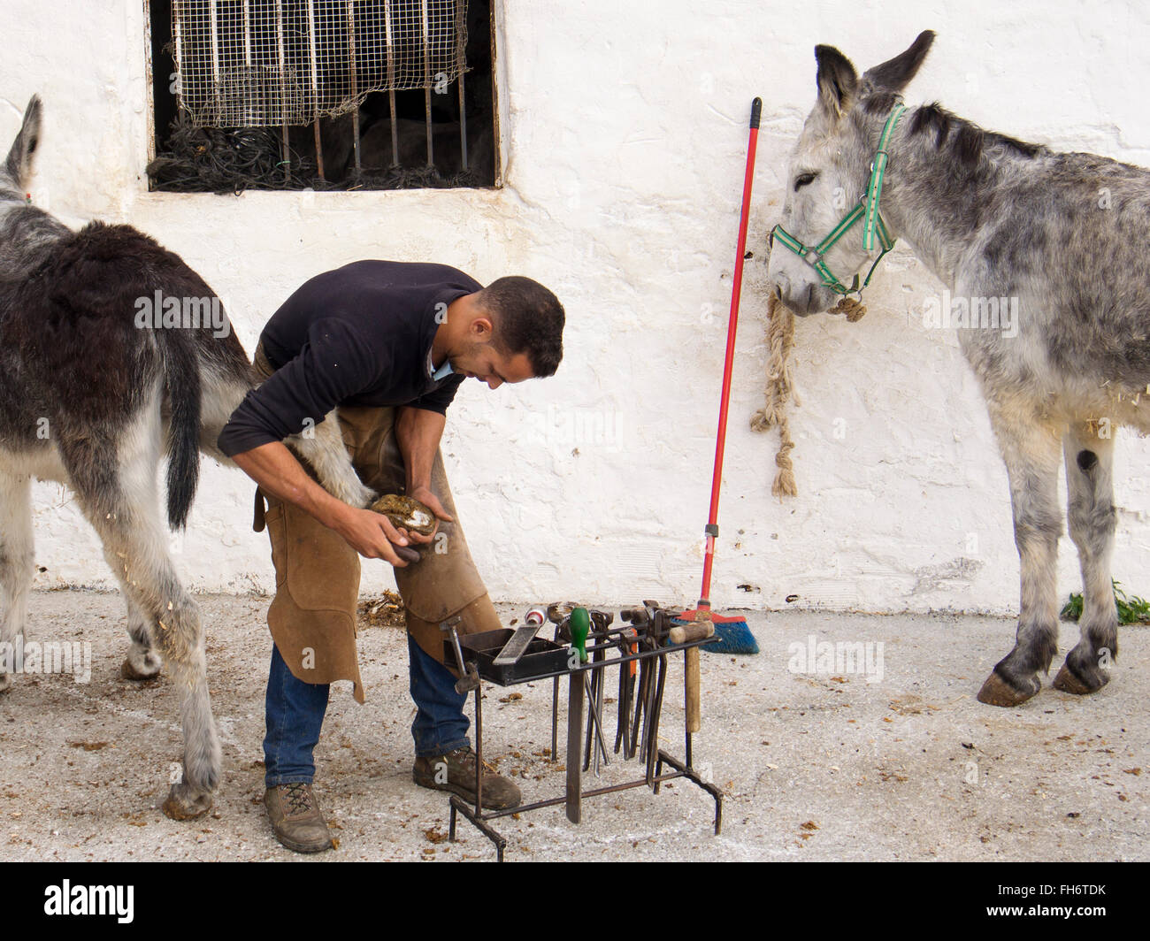 Blacksmith nailing horseshoes typical burro donkey taxi, white village Mijas, Malaga province Costa del Sol. Andalusia Stock Photo