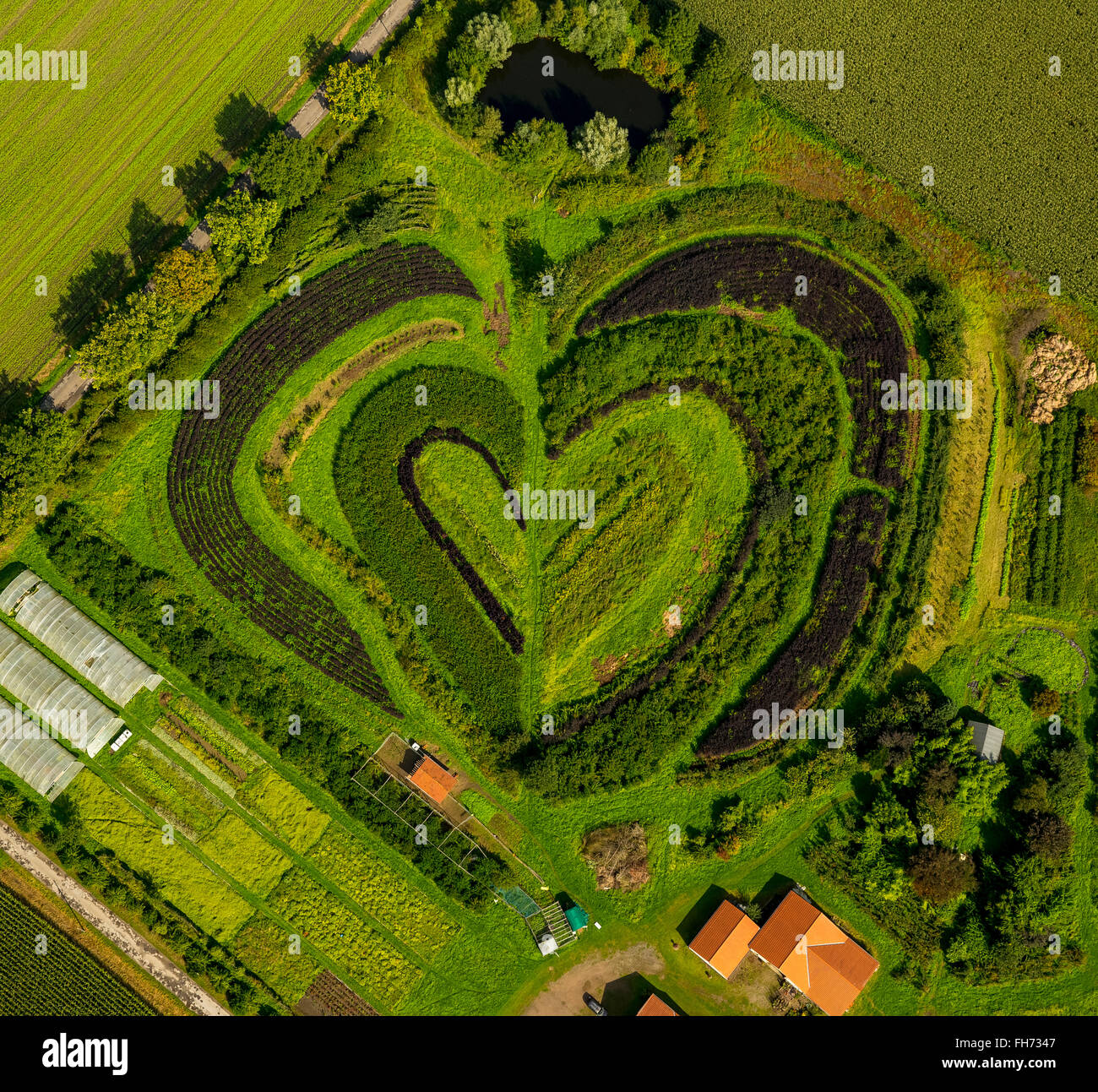 Beds in a nursery, heart shaped, market garden, Waltrop, Ruhr district, North Rhine-Westphalia, Germany - Stock Image