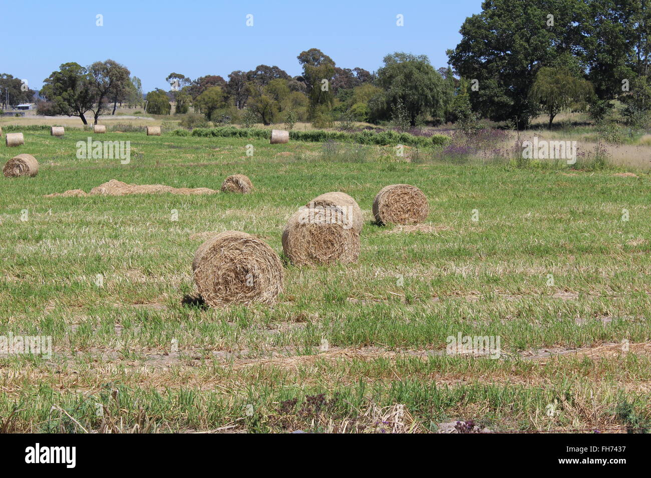 Hay Stacks in the countrside - Stock Image