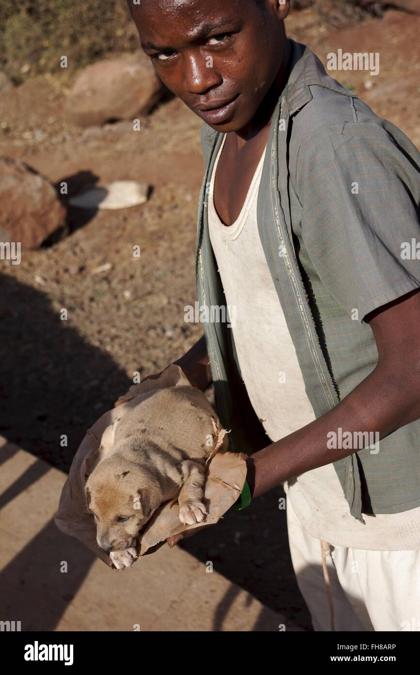 A poorly puppy in Ethiopia - Stock Image