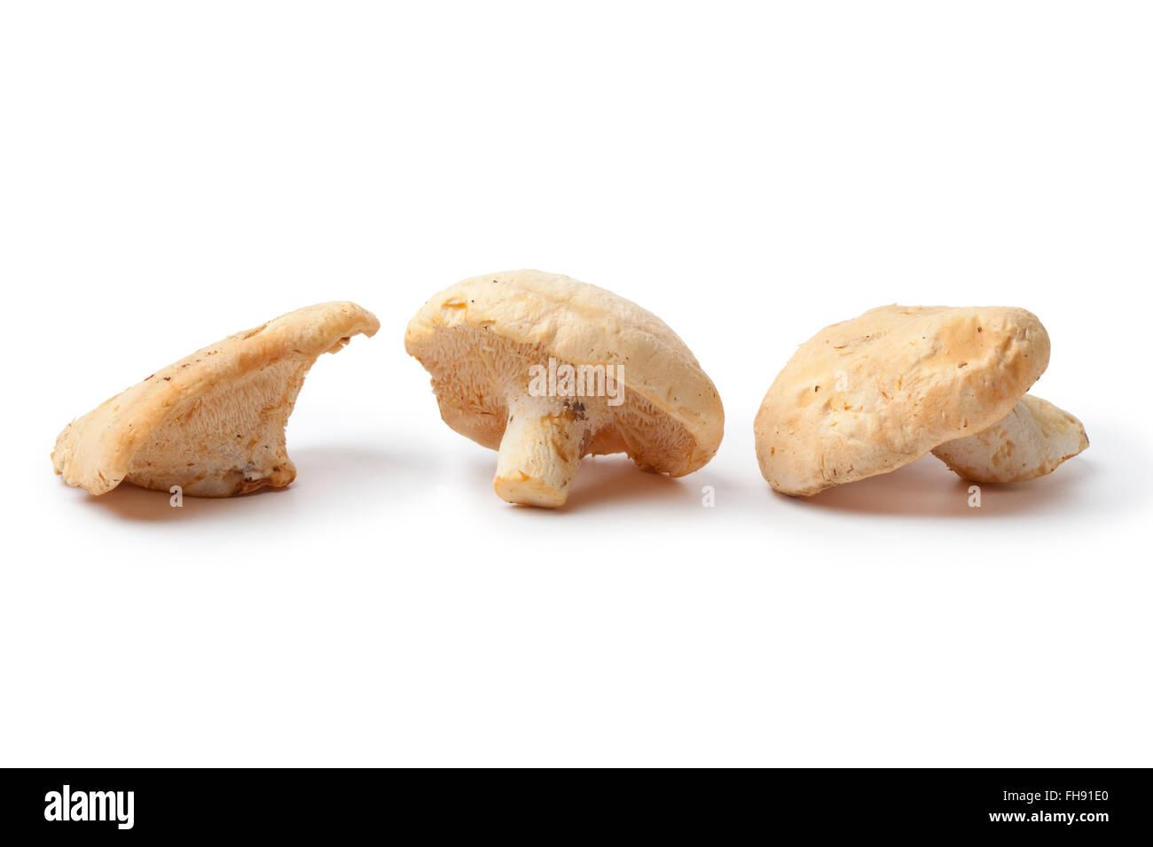 Fresh raw Wood hedgehog mushrooms isolated on white background - Stock Image