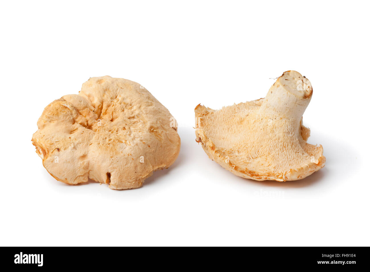 Fresh raw Pied de mouton mushrooms isolated on white background - Stock Image