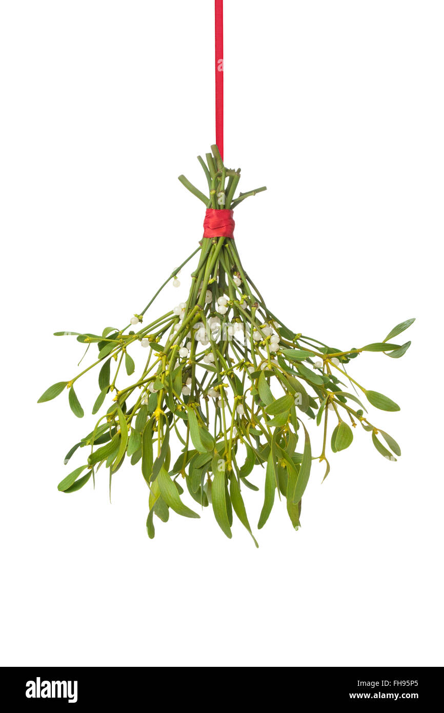 Fresh mistletoe hanging on a red ribbon on white background - Stock Image