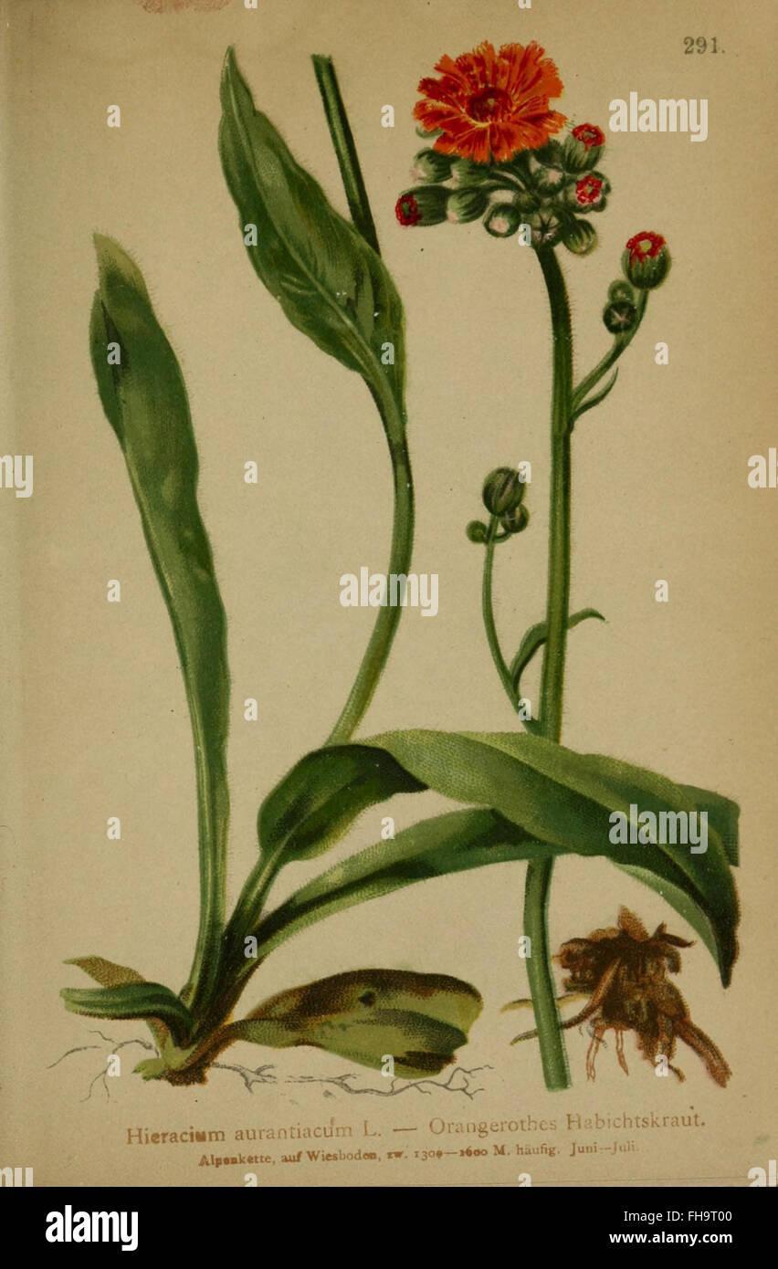 Atlas der Alpenflora Stock Photo