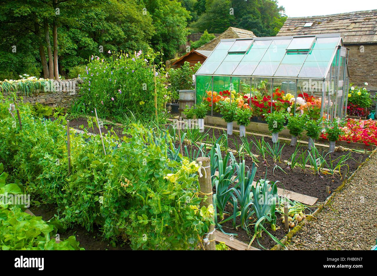 Allotment growing vegetables and flowers in the green house. - Stock Image