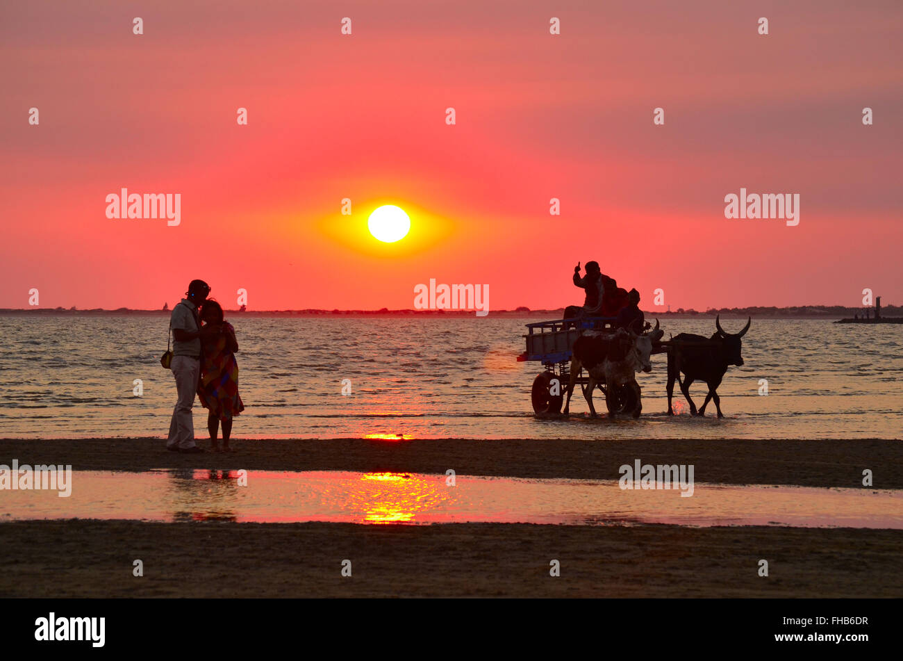 sunset in the sea shore with ox cart and two couple taking selfy - Stock Image