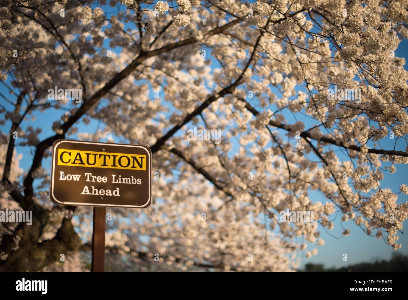 cherryblossoms com sign in