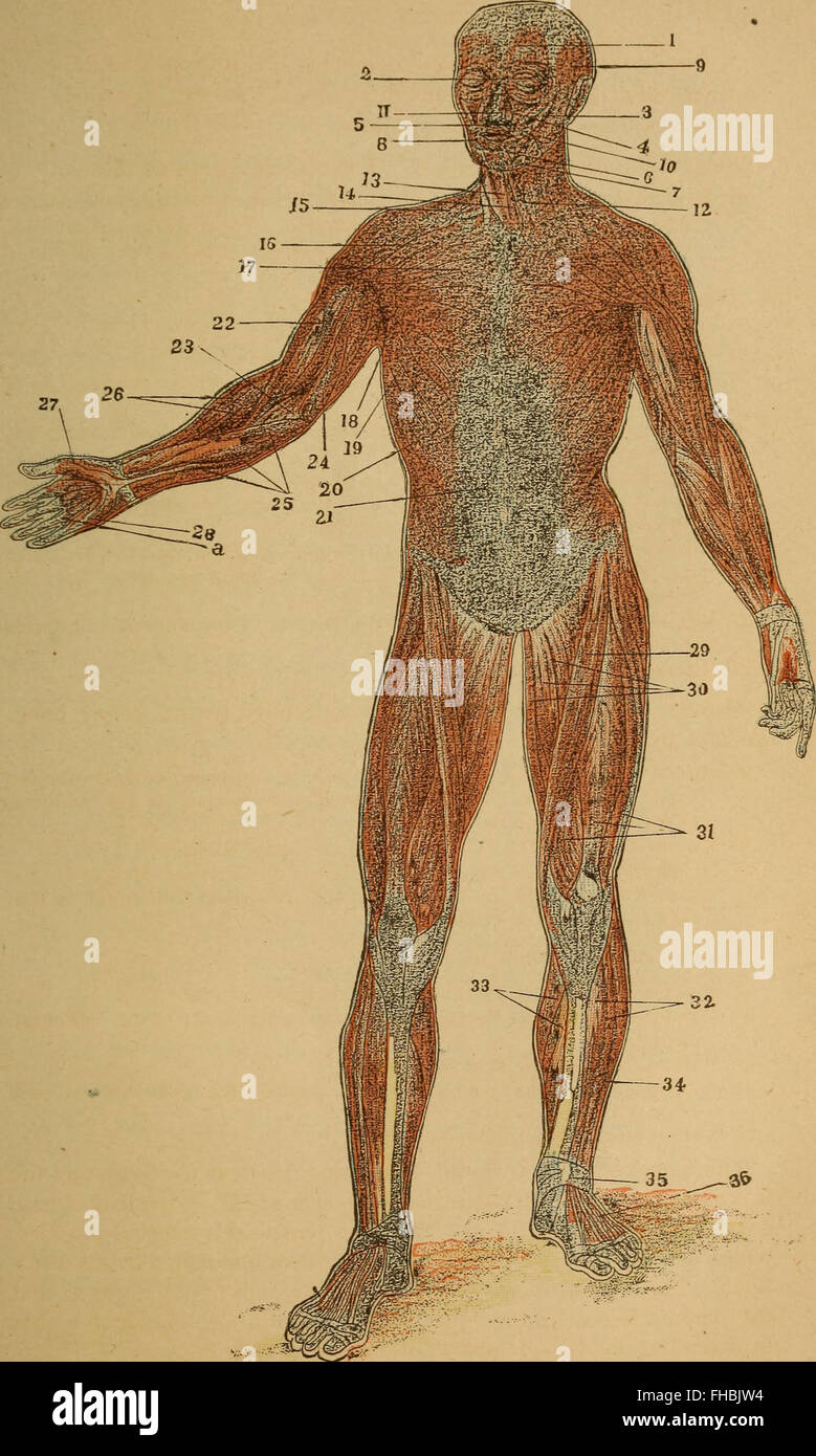 Human Body Beginners Text Book Anatomy Stock Photos & Human Body ...
