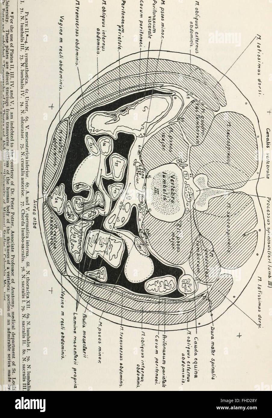 Charmant V. Mesenterica Inferior Galerie - Anatomie Und Physiologie ...